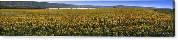 Landscape Canvas Print featuring the photograph Sunflower Panorama In Ukraine by Yuri Lev