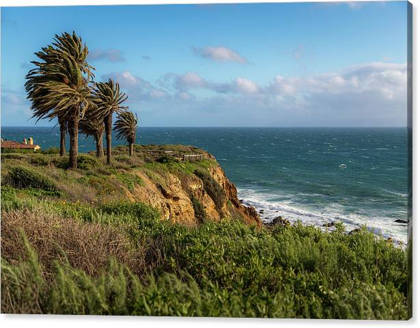 Palm Trees Blowing in the Wind by Andy Konieczny
