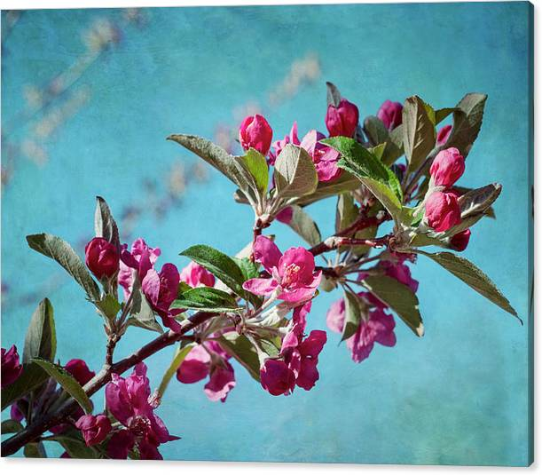 Limited Time Promotion: Springtime Crabapple Flowers Stretched Canvas Print