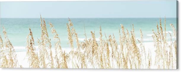 Sea Oats Beach Grass Pensacola Florida Panorama Photo by Paul Velgos