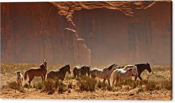 Wild Horses in the Desert by Susan Schmitz