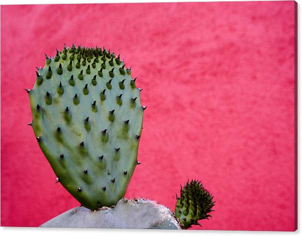 Cactus and Pink Wall by Carol Leigh