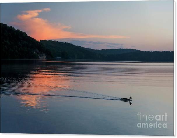 Morning Mallard by Dennis Hedberg
