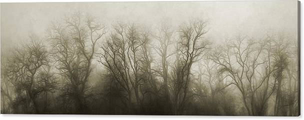 The Secrets of the Trees by Scott Norris