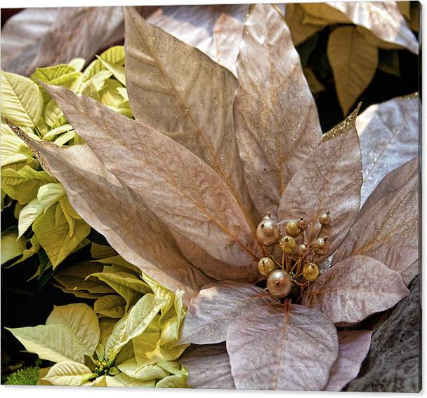 Limited Time Promotion: Poinsettia Winter Decoration Stretched Canvas Print