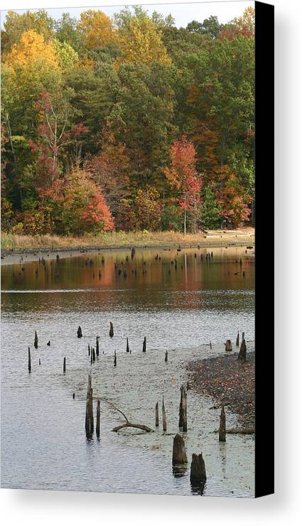 Fall Foliage Canvas Print featuring the photograph Tall Reflection by Dawn Edwards