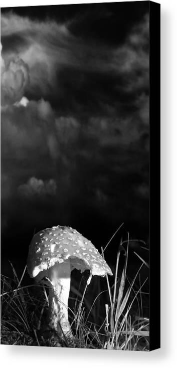 Mushrooms Canvas Print featuring the photograph Mushroom by Bob Orsillo