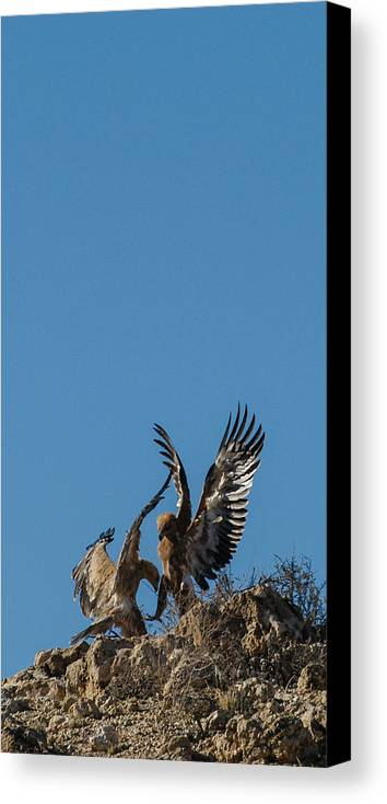 Action Canvas Print featuring the photograph Wings Up by Alistair Lyne