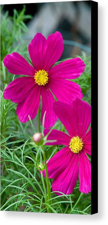 Pink Canvas Print featuring the photograph Pink Flower by Michael Bessler
