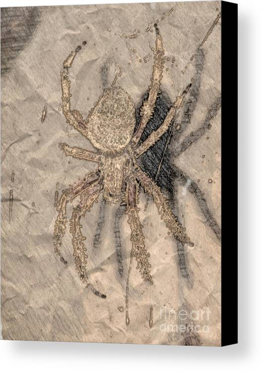 Insect Canvas Print featuring the photograph The Shadow by Donna Brown