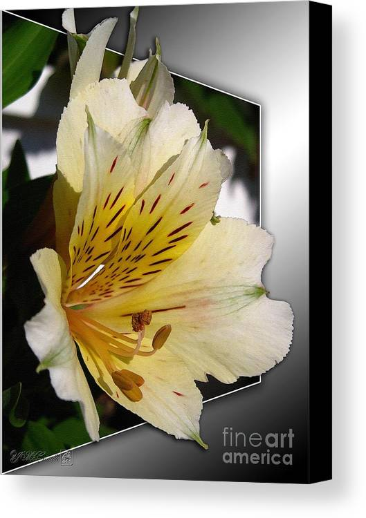 Alstroemeria Canvas Print featuring the painting Alstroemeria Named Marilene Staprilene by J McCombie
