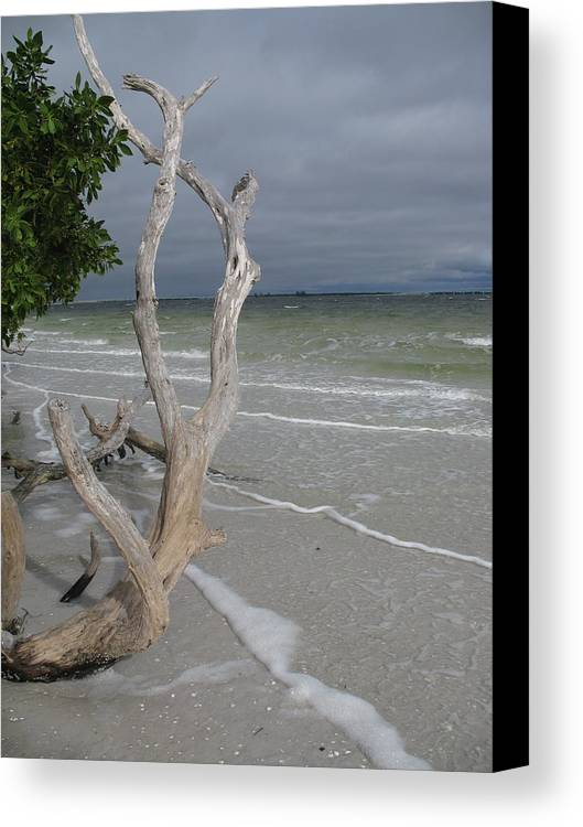 Beach Canvas Print featuring the photograph Driftwood On The Beach by Christiane Schulze Art And Photography
