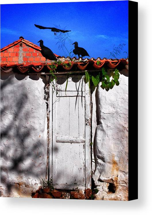 Amigos Negros Canvas Print featuring the photograph Amigos Negros by Skip Hunt
