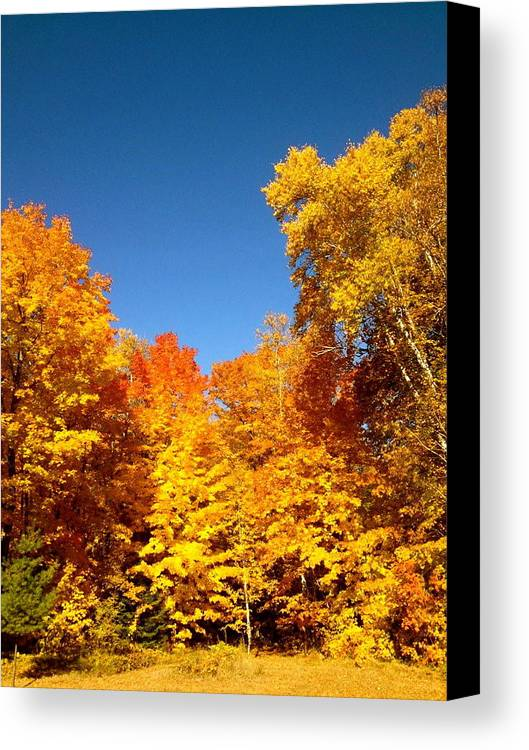 Minnesota Canvas Print featuring the photograph An Autumn Of Gold by Danielle Broussard