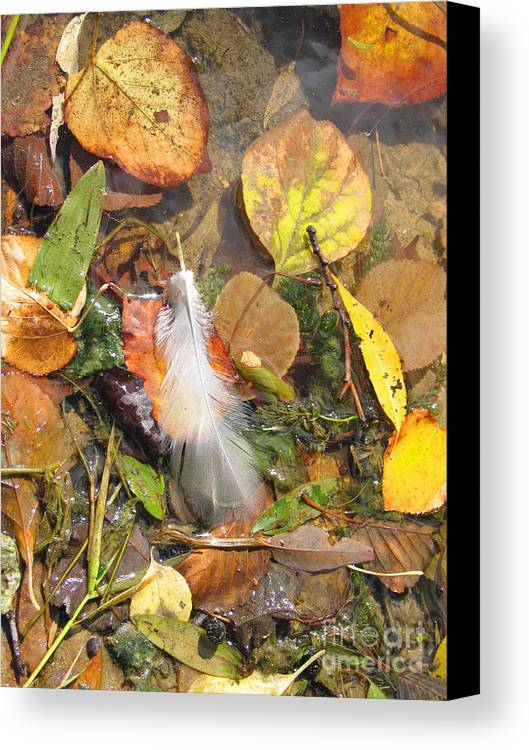 Autumn Canvas Print featuring the photograph Autumn Leavings by Ann Horn