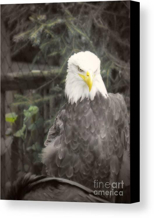 Eagle Canvas Print featuring the photograph Bald Eagle by Dawn Gari