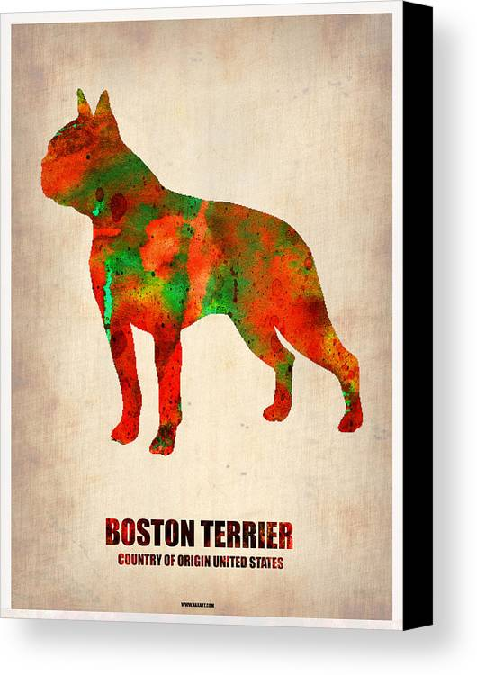 Boston Terrier Canvas Print featuring the painting Boston Terrier Poster by Naxart Studio