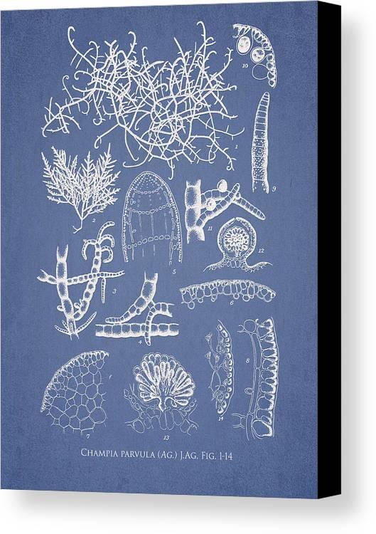 Algae Canvas Print featuring the digital art Champia Parvula by Aged Pixel