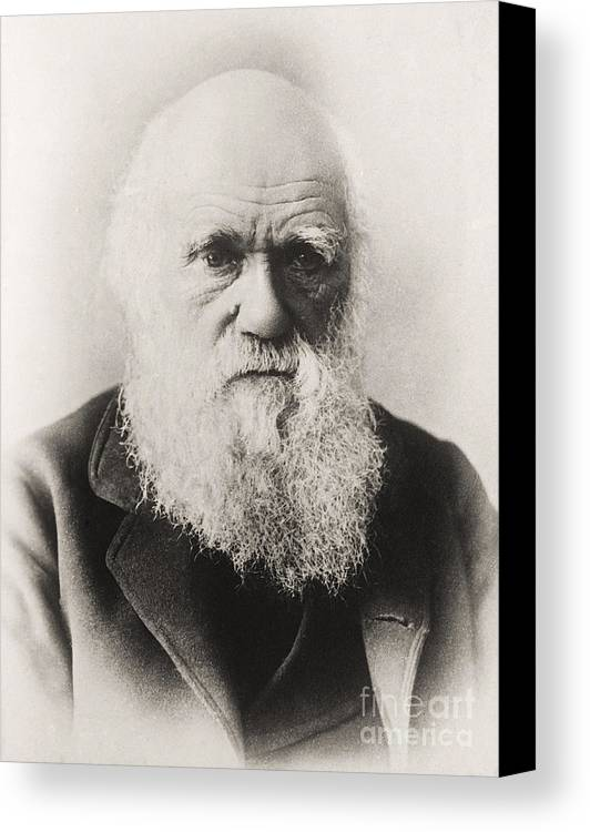Beard Canvas Print featuring the photograph Charles Darwin by English School