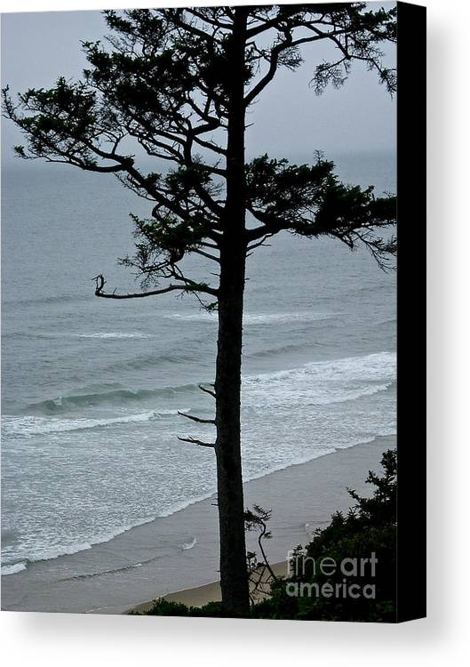Pacific Coast Canvas Print featuring the photograph Coastal Tree by Brad Gravelle
