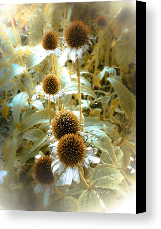 Photo Digital Photography Flowers Cone Petals Leaves Nature Prints Posters Greeting Cards Canvas Print featuring the mixed media Cone Flowers by Connie Dye