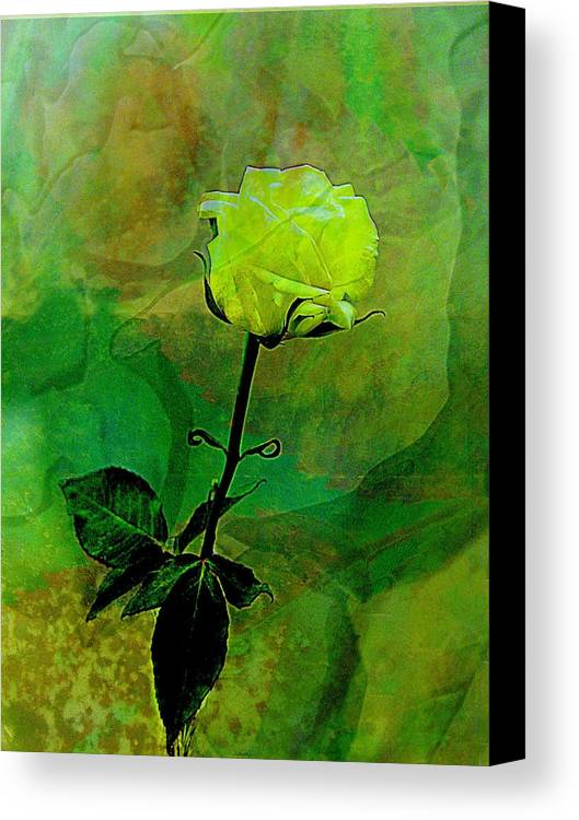 Rose Canvas Print featuring the photograph Enduring Yellow Rose by Shirley Sirois