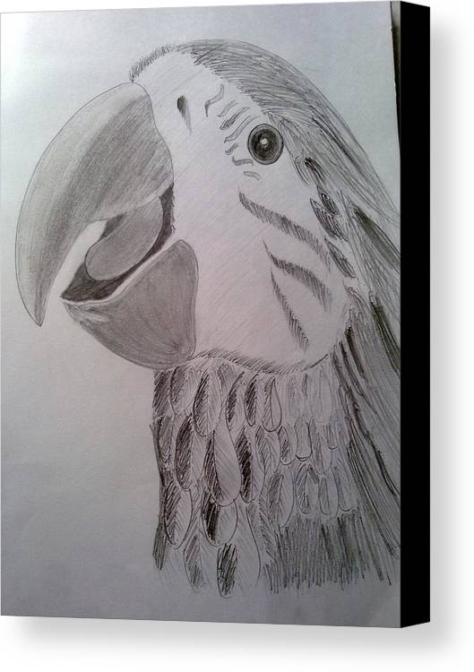 Pencil Shading Canvas Print featuring the drawing Expressive Parrot by Poornima Ravi