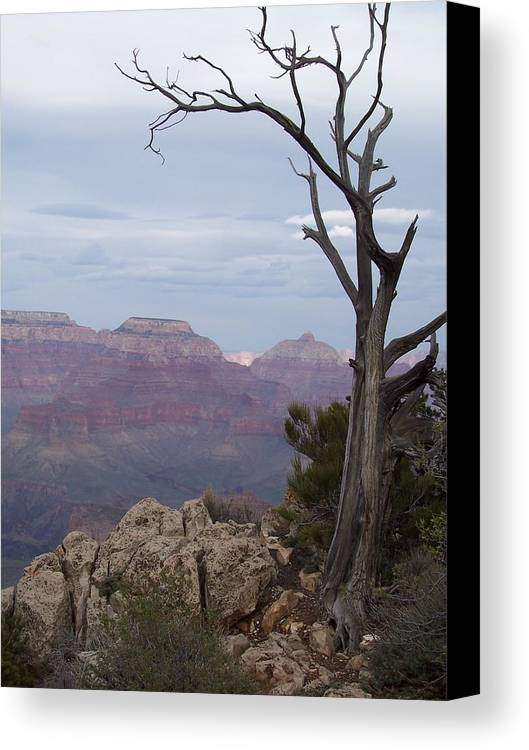 Grand Canyon Canvas Print featuring the photograph First Time by Kris Ohmen