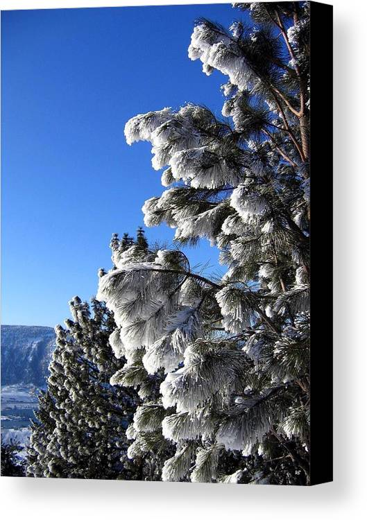 Frost Canvas Print featuring the photograph Frosty Limbs by Will Borden
