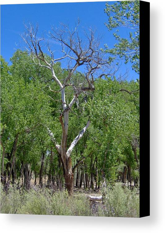 Tree Canvas Print featuring the photograph Ghost Tree by Jasmin's Treasures