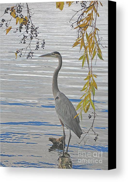 Heron Canvas Print featuring the photograph Great Blue Heron by Ann Horn