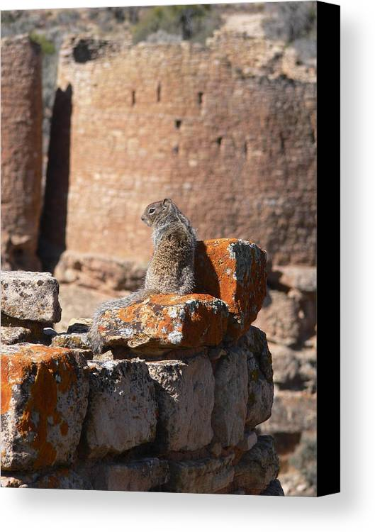 Hovenweep Canvas Print featuring the photograph Guardian Of Hovenweep by Steve Brown