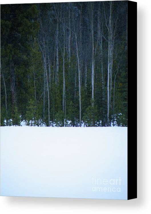 Winter Canvas Print featuring the photograph Hard Line Winter by Brian Boyle