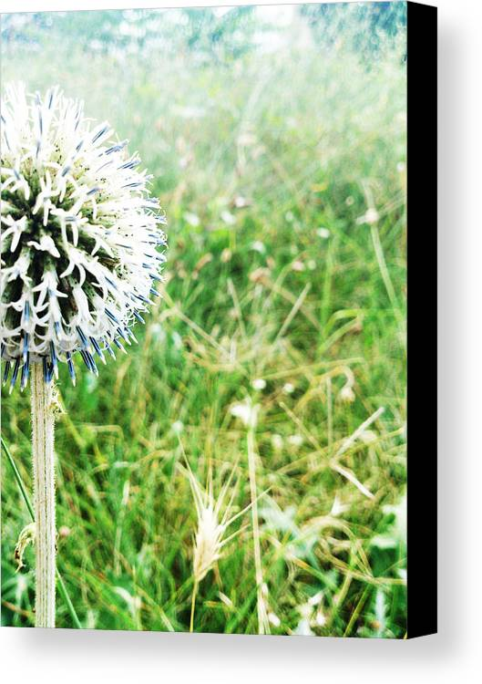 Hello Canvas Print featuring the photograph Hello by Lucy D