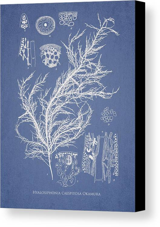 Algae Canvas Print featuring the digital art Hyalosiphonia Caespitosa Okamura by Aged Pixel