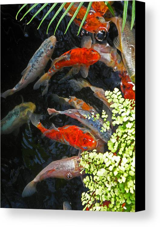 Fish Canvas Print featuring the photograph Koi Fish I by Elizabeth Hoskinson