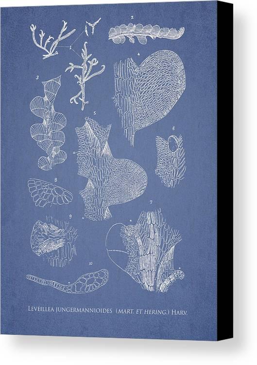 Algae Canvas Print featuring the digital art Leveillea Jungermannioides by Aged Pixel