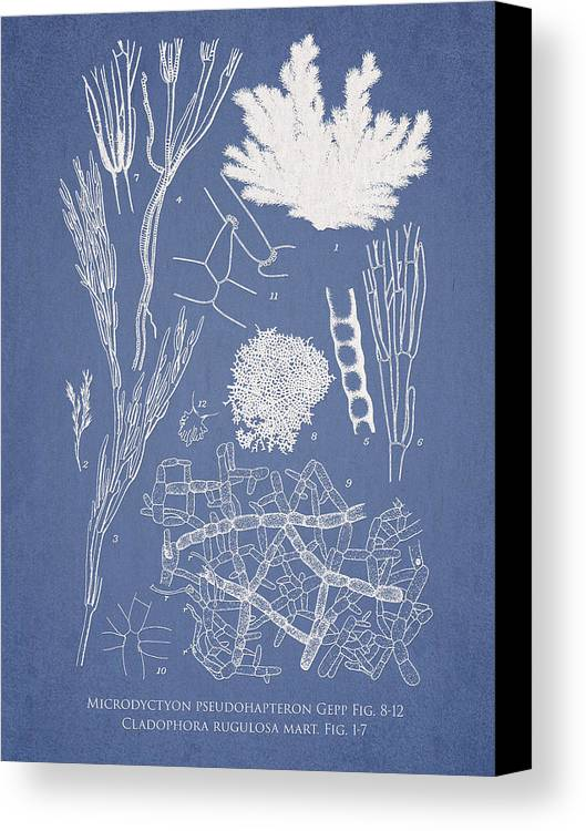 Algae Canvas Print featuring the digital art Microdyctyon And Cladophora by Aged Pixel