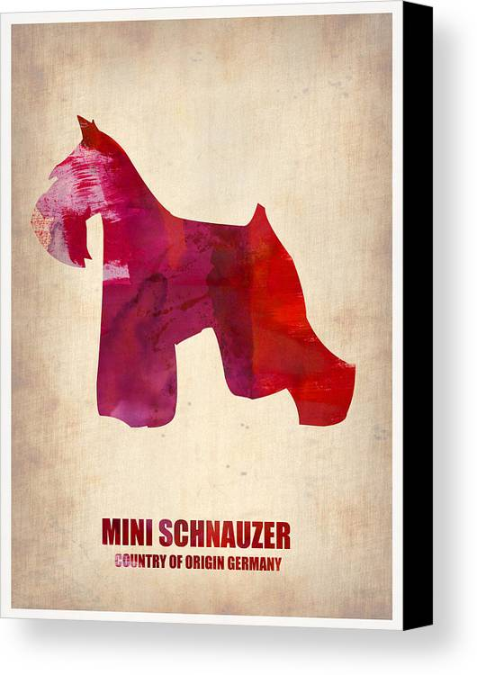 Miniature Schnauzer Canvas Print featuring the painting Miniature Schnauzer Poster by Naxart Studio