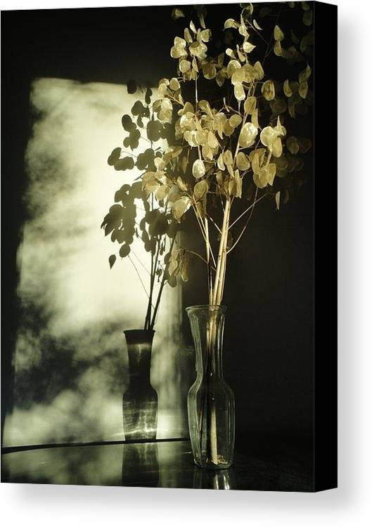 Guy Ricketts Photography Canvas Print featuring the photograph Money Plants Really Do Cast Shadows by Guy Ricketts