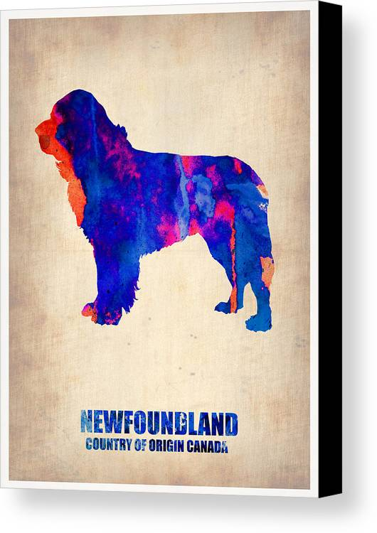 Newfoundland Canvas Print featuring the painting Newfoundland Poster by Naxart Studio