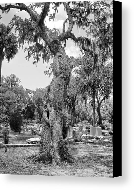 Oak Tree Canvas Print featuring the photograph Oak Tree With A Face 2 by Victoria Lakes