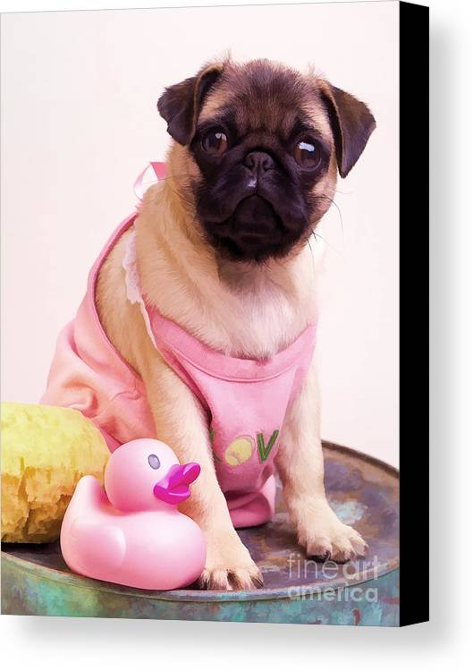 Pug Pink Dog Pet Puppy Puppies Cute Adorable Portrait Duckie Duck Bathtime Bath Wash Dress Clothed Clothing Canvas Print featuring the photograph Pug Puppy Bath Time by Edward Fielding