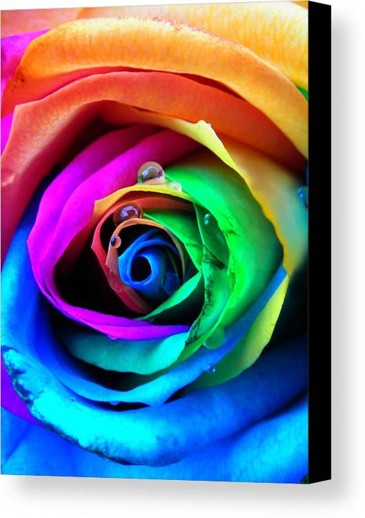 Rainbow Canvas Print featuring the photograph Rainbow Rose by Juergen Weiss
