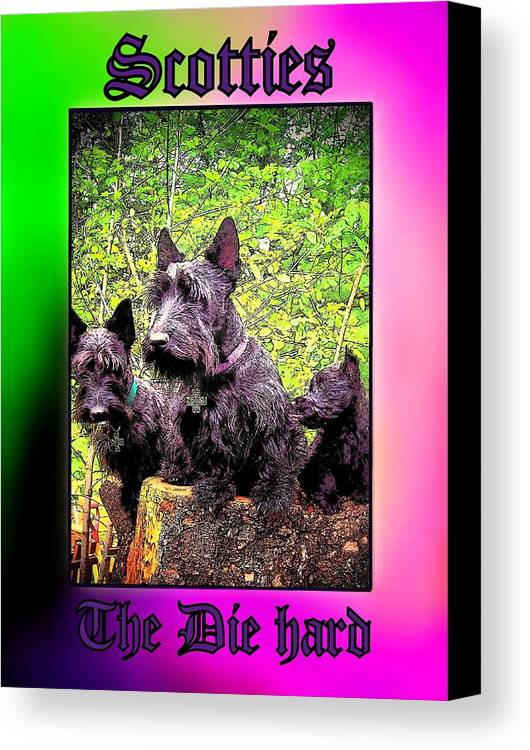 Dog Canvas Print featuring the photograph Scotties The Die Hard by Ruanna Sion Shadd a'Dann'l Yoder