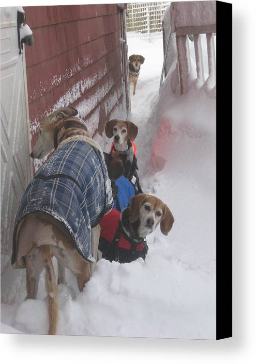 Beagles Canvas Print featuring the photograph Snow Angels by Leslie Manley