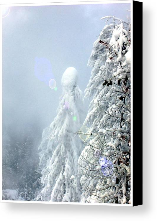 Landscape Canvas Print featuring the photograph Snowy Trees by Kae Cheatham