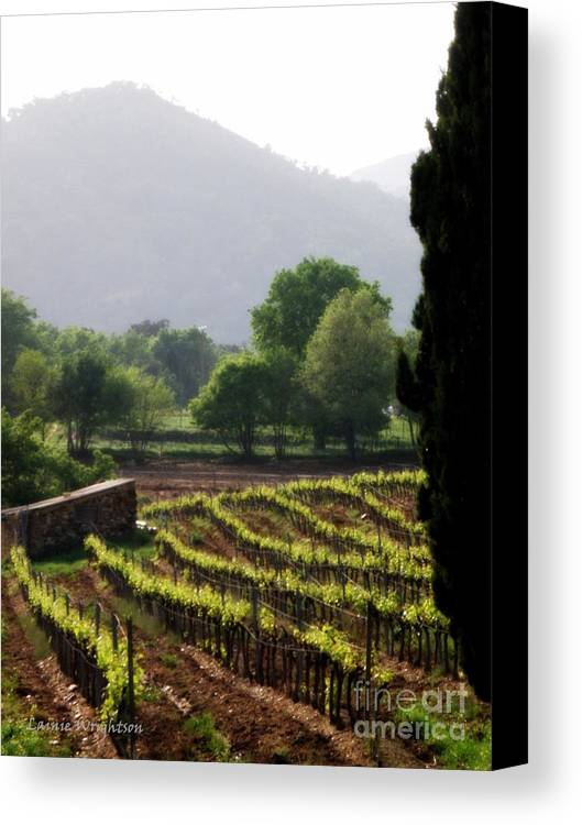 Vineyard Canvas Print featuring the photograph Spring Vines In Provence by Lainie Wrightson