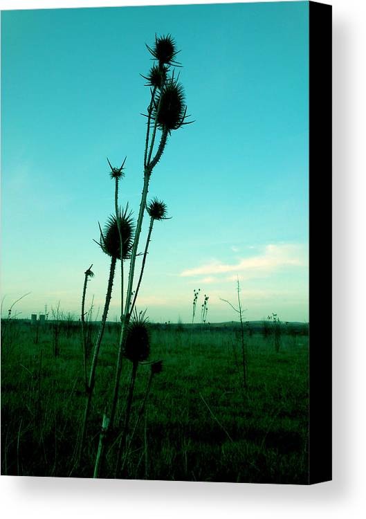 Field Canvas Print featuring the photograph Standing by Lucy D