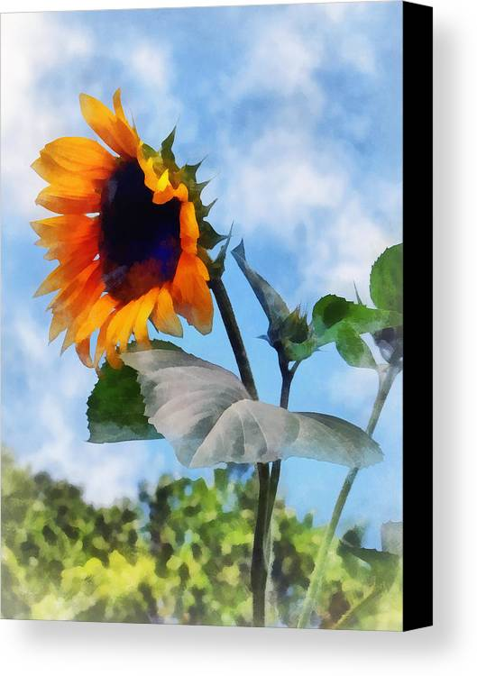 Sunflower Canvas Print featuring the photograph Sunflower Against The Sky by Susan Savad